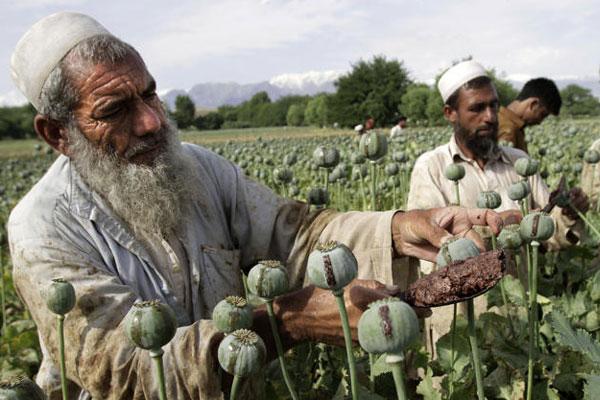 opium-farmers-600x400