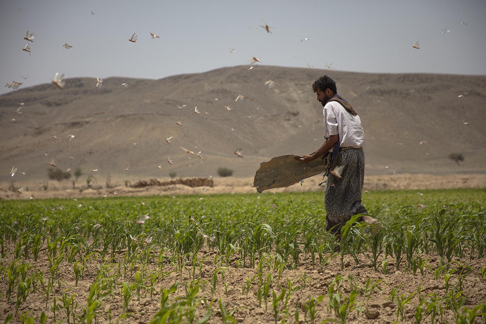 Yemen Farmers